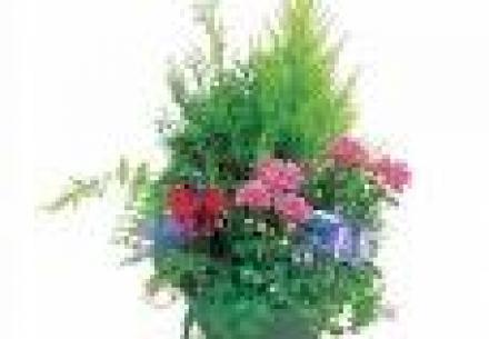 coupe plantes